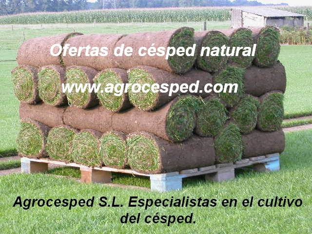 Tepes de césped natural Agrocesped.
