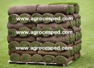 Tepes de césped Agrocesped
