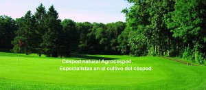Césped natural Agrocesped. Tepes de césped precultivado.