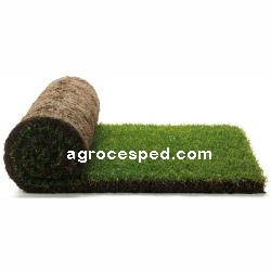 Agrocesped Tepes