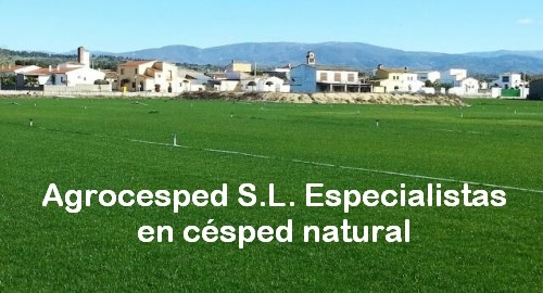 cesped natural