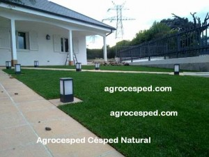 jardin con cesped natural