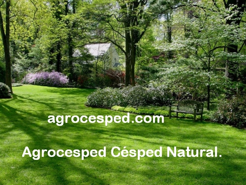 Producto agrocesped c sped natural - Cesped natural ...