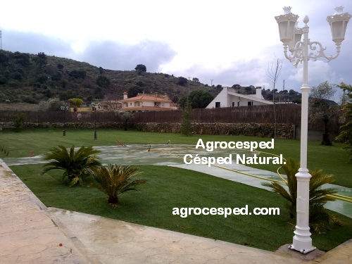 Agrocesped c sped natural tepes de c sped - Cesped natural ...