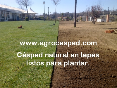 Instalaci n de c sped natural archives agrocesped c sped natural - Plantar cesped natural ...