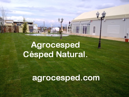 Agrocesped c sped natural tepes de c sped - Plantar cesped natural ...