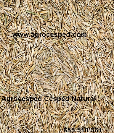 Semillas de Césped Natural Agrocesped