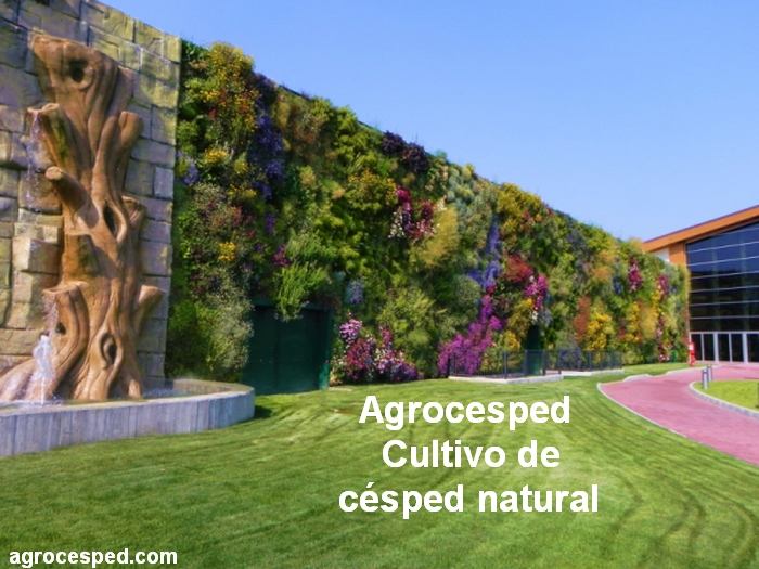 Jard n y decoraci n archives agrocesped c sped natural for Plantaciones verticales